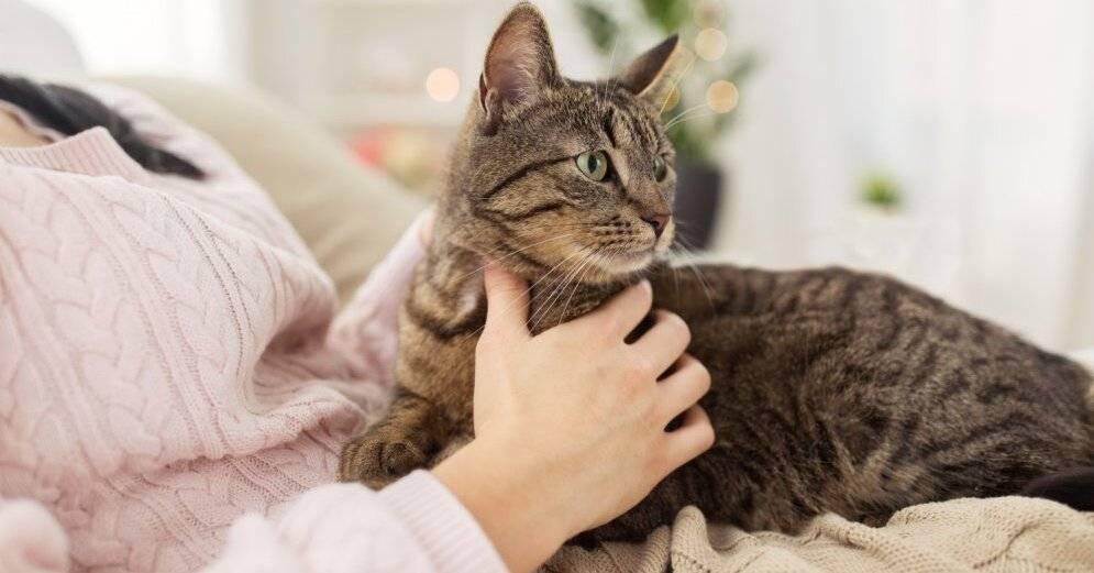 9 признаков того, что ваша кошка вас обожает