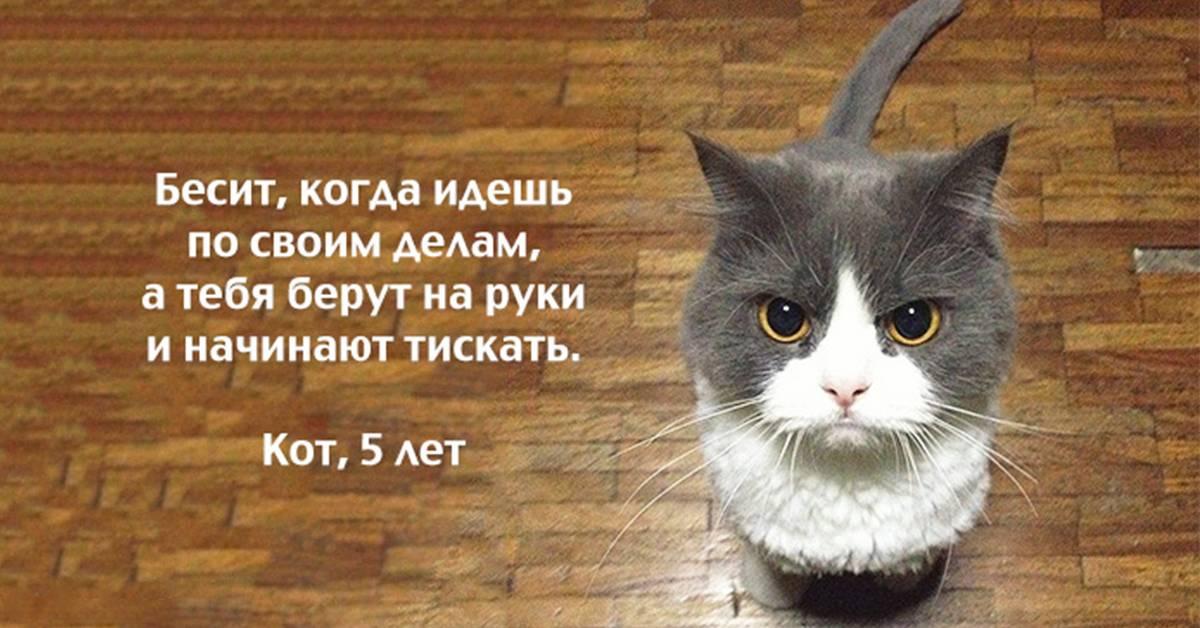 Цветы, которые могут насмерть отравить кота или собаку - gafki.ru