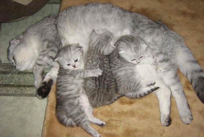Как глистогонить котёнка с помощью препарата празител. об этом должен знать каждый хозяин