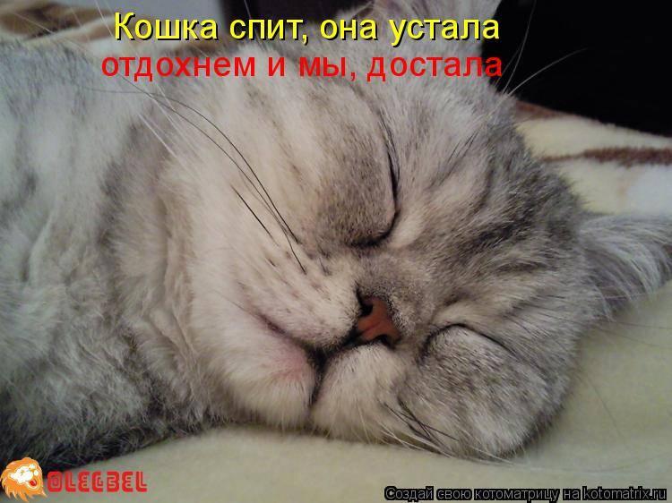 Почему нельзя спать с кошками в одной кровати?