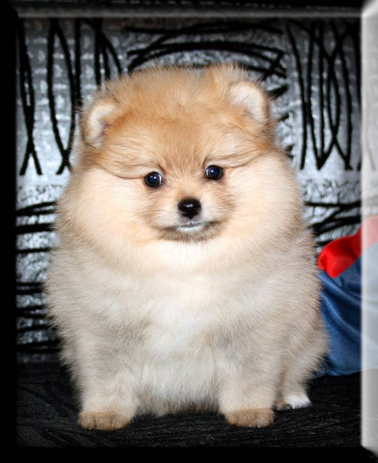 Как назвать собаку-девочку или мальчика маленькой породы