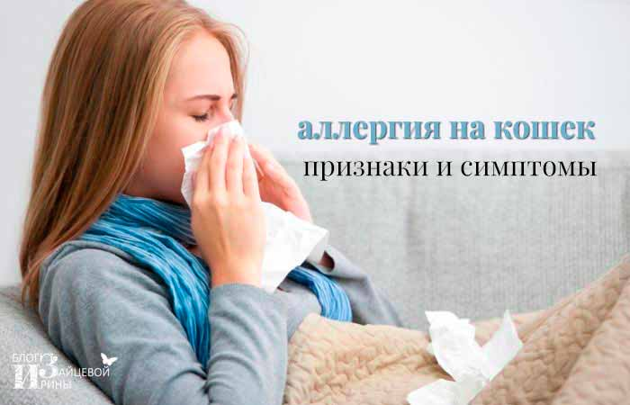 Аллергия на кошек: «да» или «нет» общению с животными?