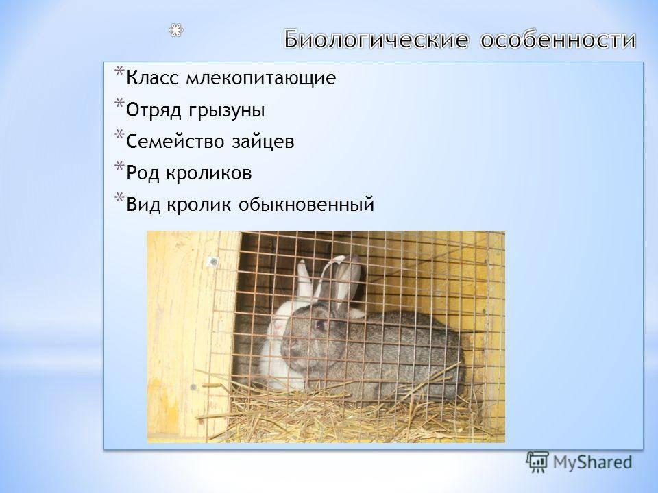 Дикий кролик - petnaobed.ru