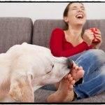 По каким причинам собака может постоянно разлизывать лапу до кожи