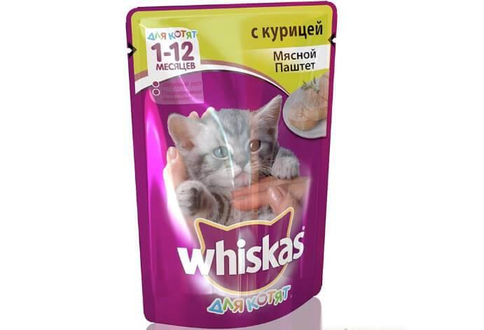 Лучшие сухие корма для кошек