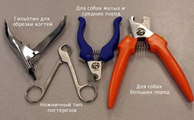 Как подстричь когти собаке в домашних условиях, правильная стрижка ногтей ножницами