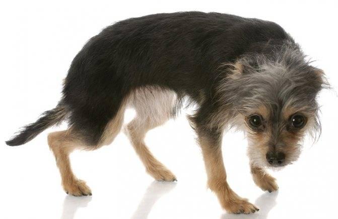 Как называется боязнь собак: причины и лечение кинофобии