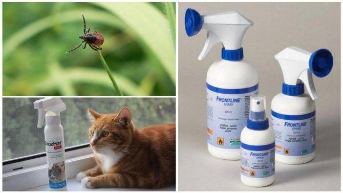 Средства, защищающие кошку от клещей