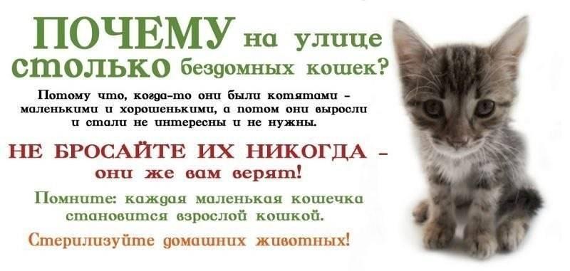 Как кошки благодарят хозяев: 7 способов кошачьего «спасибо» - gafki.ru