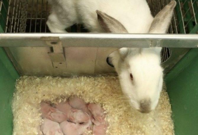 Почему умер крольчонок