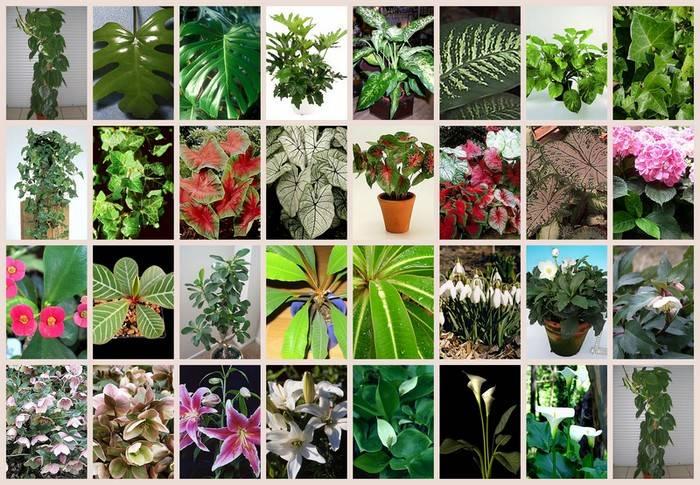 Топ 10 самых ядовитых комнатных растений: список опасных цветков