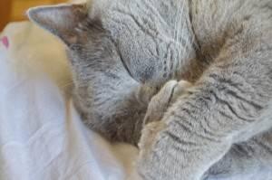 Почему у кота появляется насморк, чем он опасен и как его лечить в домашних условиях