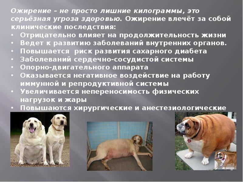 Самые опасные собаки в мире ? топ 30 пород собак убийц с фото и описанием   petguru