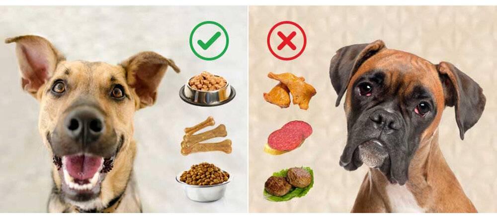 Почему нельзя кормить свининой собаку: причины и последствия