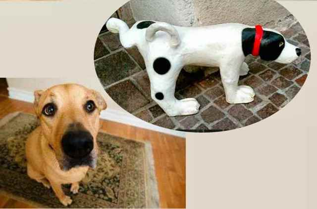Собака часто присаживается писать на прогулке. с чем связано частое мочеиспускание у собак? стерилизация и ее побочные эффекты