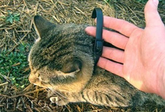 Капли для котят от блох: виды, применение, дозировка