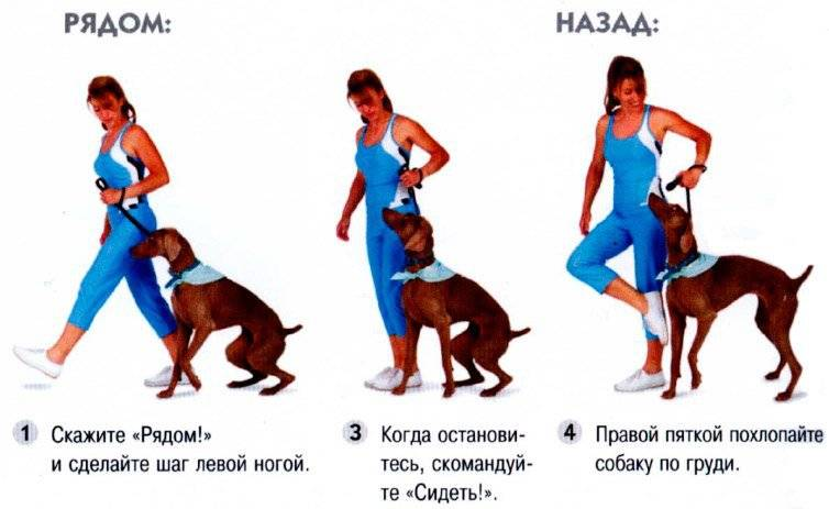 Как приучить щенка к туалету в квартире быстро