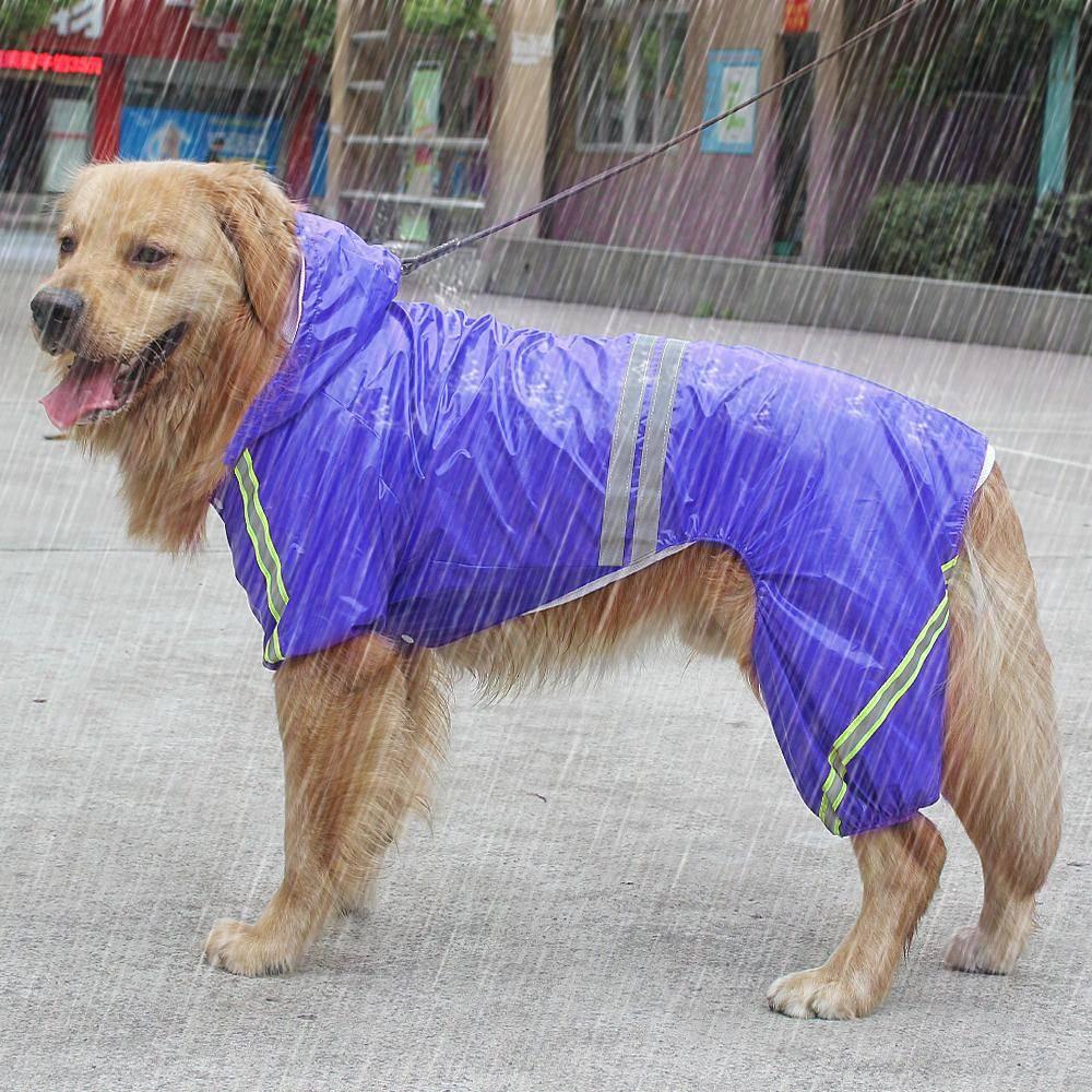 25 популярных собак средних размеров