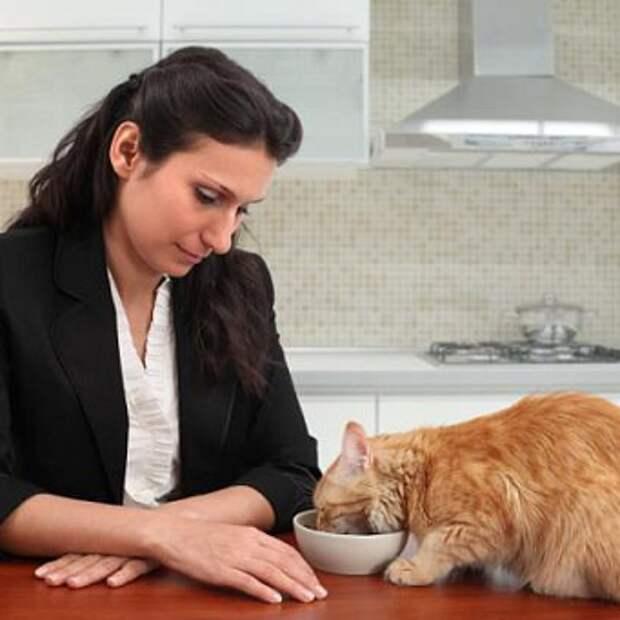 Как правильно и чем нужно кормить кошку, а также сколько раз в день в домашних условиях