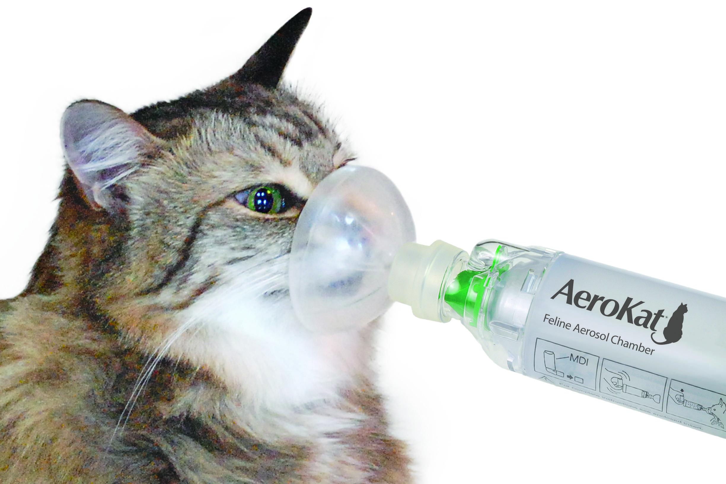 Котёнок тяжело дышит: причины, что делать. особенности дыхания котят, почему котёнок вдруг начал тяжело и с трудом дышать – первая помощь питомцу - автор екатерина данилова - журнал женское мнение