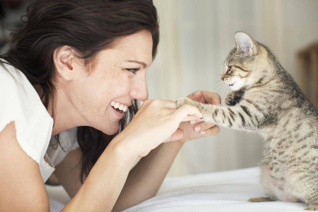 Как разговаривать с котами и кошками? ученые нашли ответ - hi-news.ru