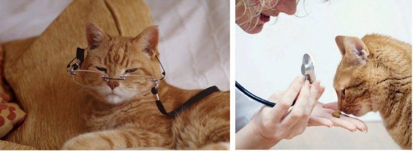 Кошка в возрасте - проблемы и тревожны симптомы у возрастных кошек и котов   caticat.ru