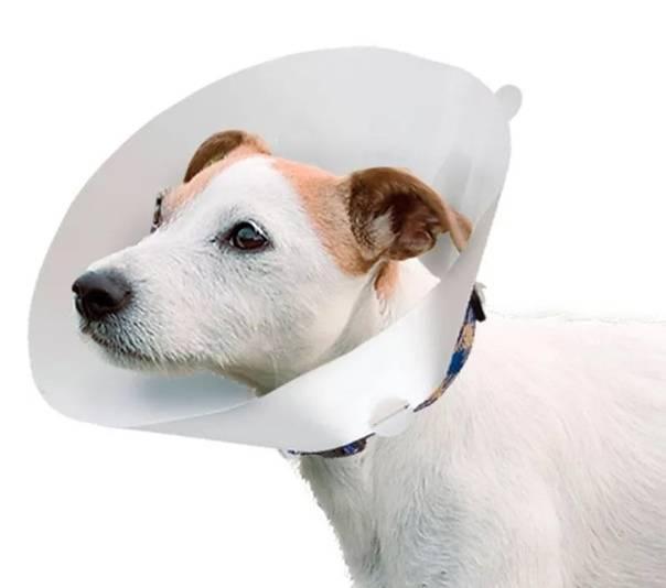 Особенности конструкции воротника для собаки своими руками: из бутылки
