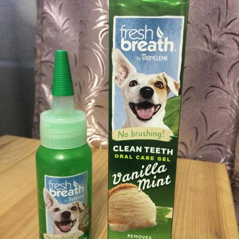 Зубной камень у собак и методы его удаления: как избавиться в домашних условиях и в ветклинике?