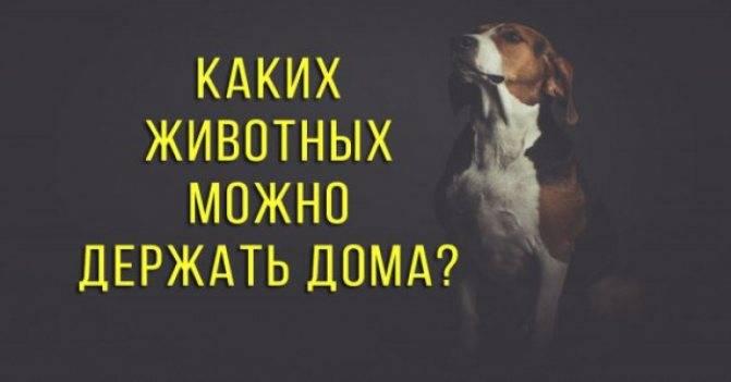 Кириллица  | почему татарам нельзя держать собак дома