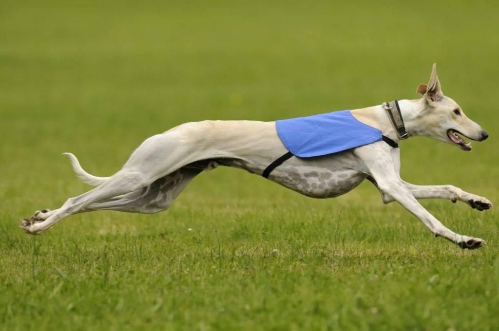 Топ-10 самые сильные породы собак в мире