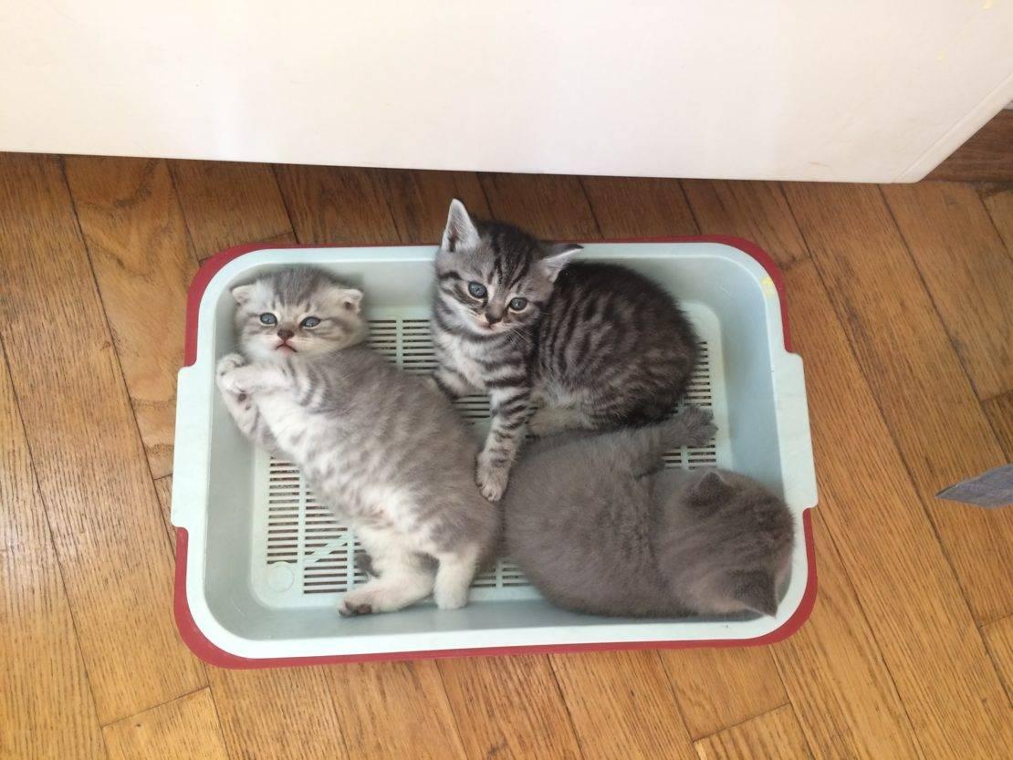 Когда котята начинают есть самостоятельно (видео)