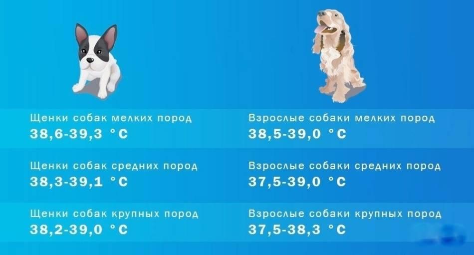 Нормальная температура тела у собак | какая норма