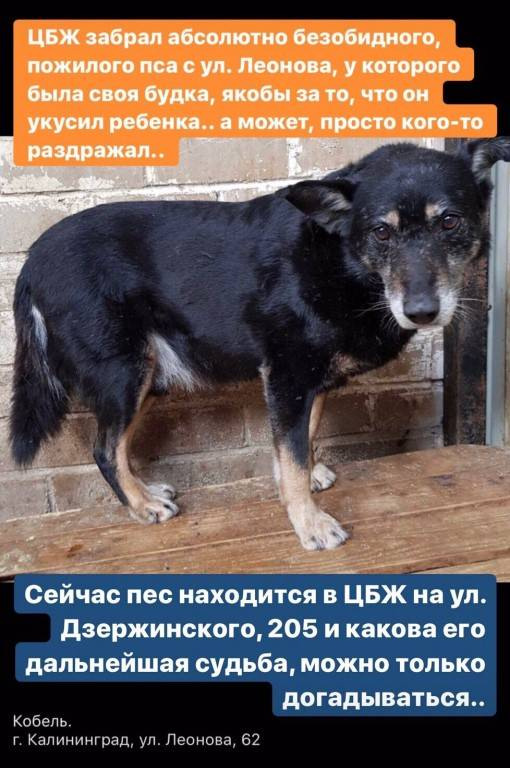 Продолжительность жизни той-терьеров в домашних условиях: сколько живут собаки данной породы и что на это влияет