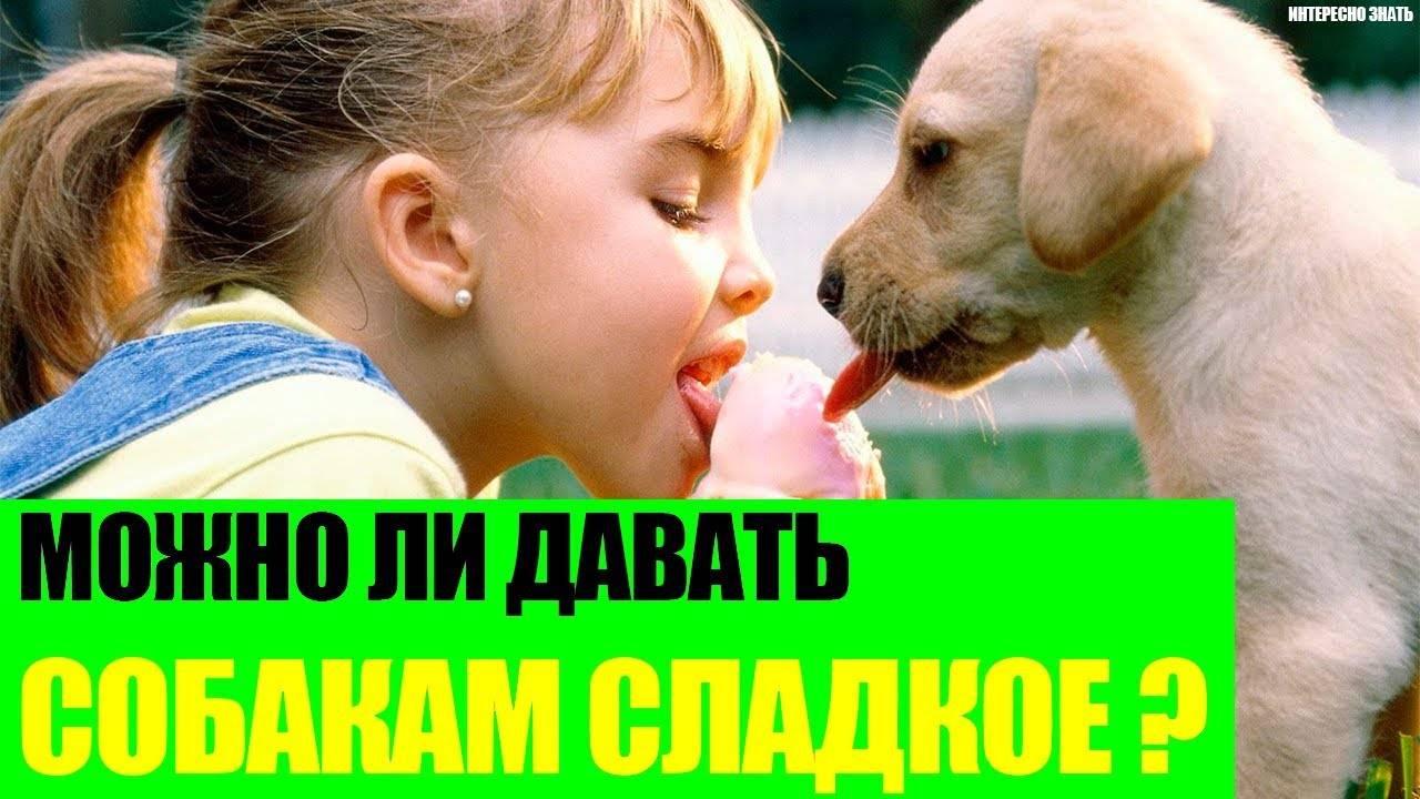 Можно ли давать собакам сладости?