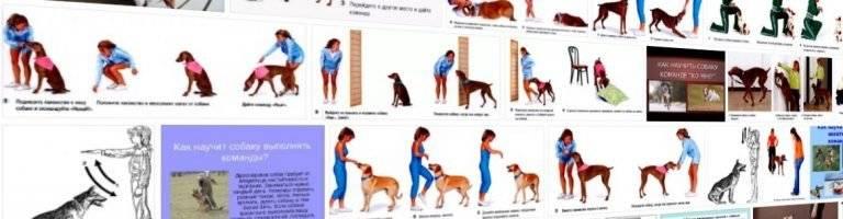 Как научить собаку команде фас в домашних условиях: инструкция с видео