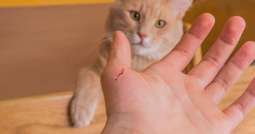 Как понимать кошек. личный опыт - кошки