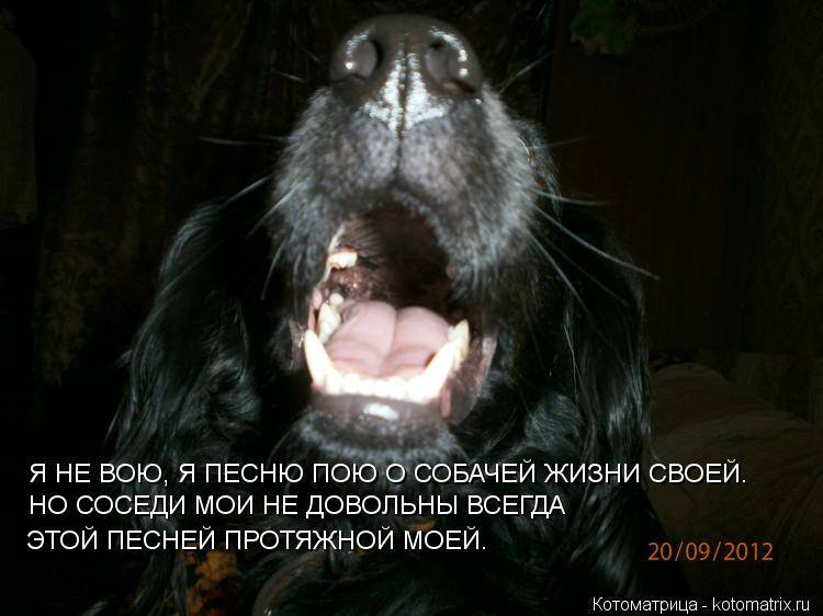 Лает и воет собака у соседей в квартире: что делать по закону, куда жаловаться