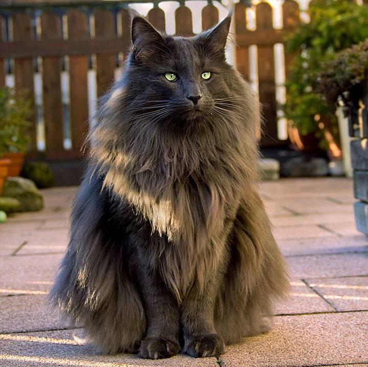 Красивые кошки: самые лучшие породы в мире
