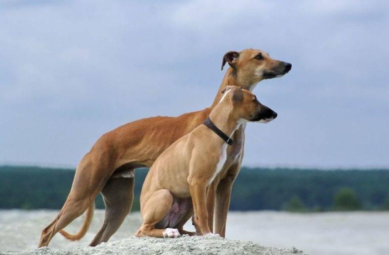 Топ-10 самых сильных собак в мире:список и описание