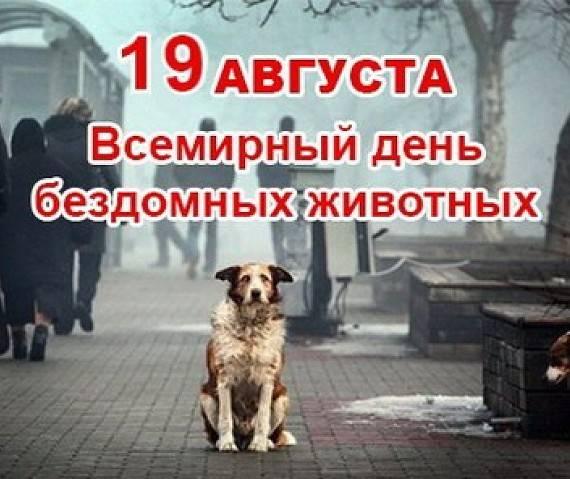 Когда отмечается день собак: особенности международного праздника в россии