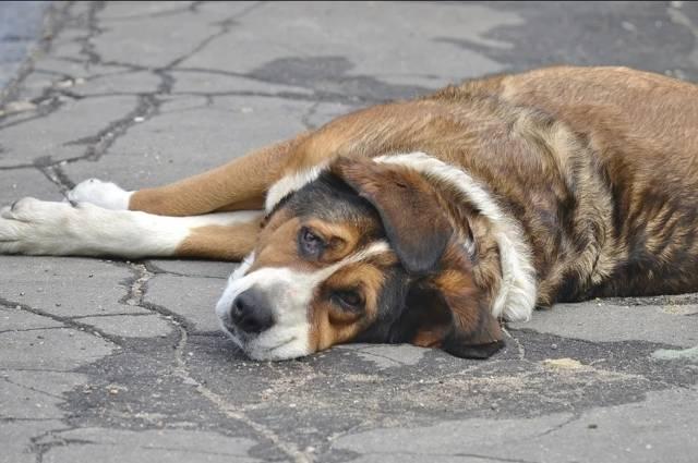 Как помочь собаке пережить жару. симптомы перегрева, помощь при солнечном ударе