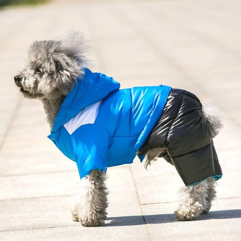 Модный пёс: 9 марок одежды и амуниции для собак — wonderzine