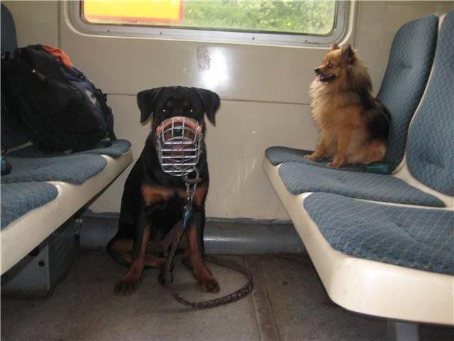 Путешествуйте с собакой: правила перевозки животного
