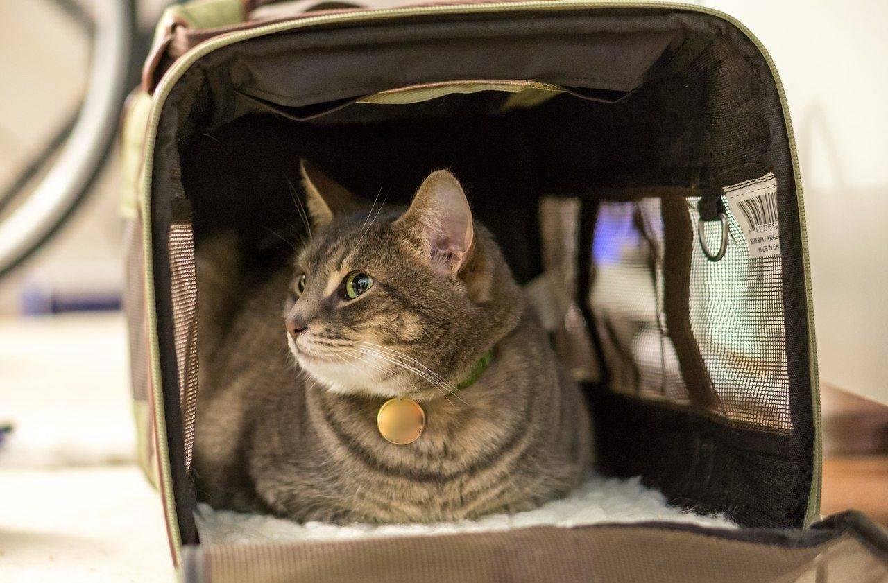 Как перевозить кота в самолете: документы, правила при перевозе животных в самолете