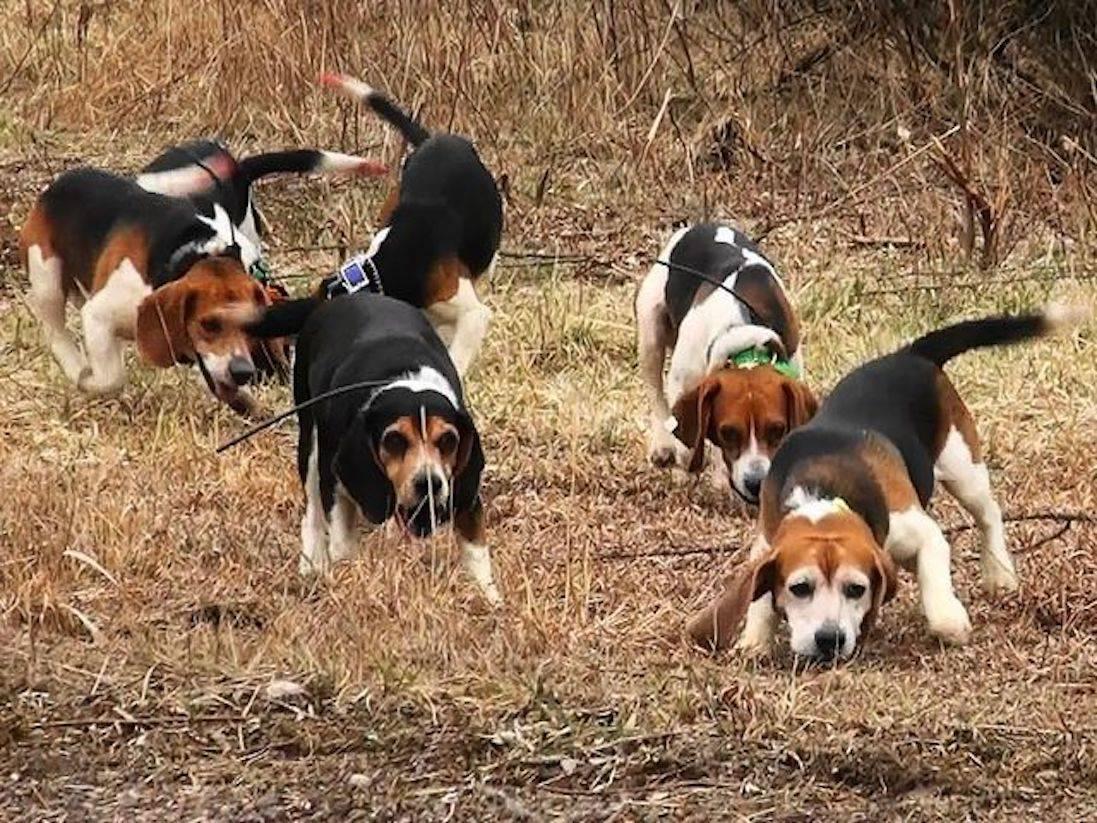 Породы охотничьих собак: 5 надежных друзей, на которых можно положиться | выживание в дикой природе