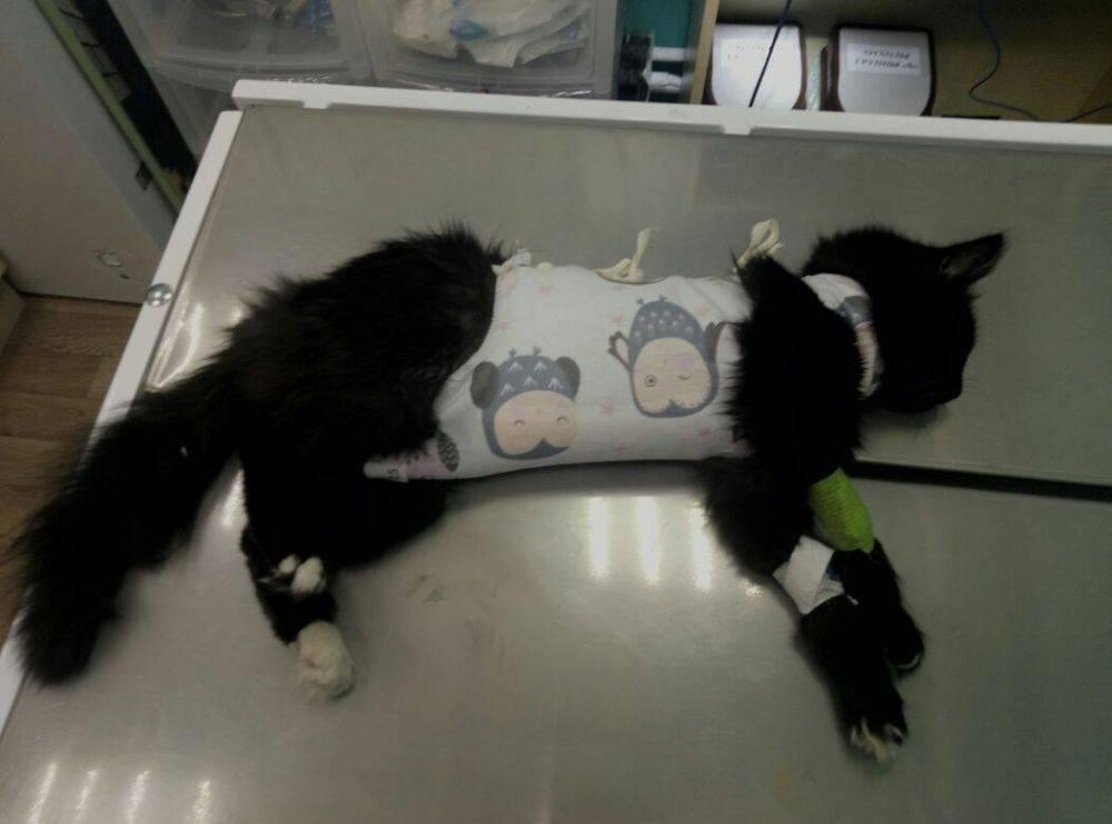 Когда можно выпускать кошку гулять после стерилизации?