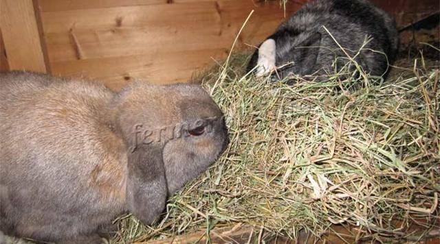 Можно ли кроликам черный хлеб. допустимо ли кормление кроликов хлебом или сухарями