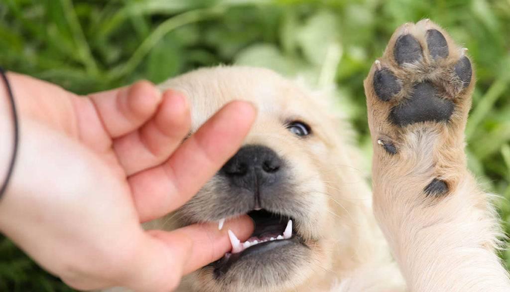 Собака чешется и выгрызает шерсть возле хвоста