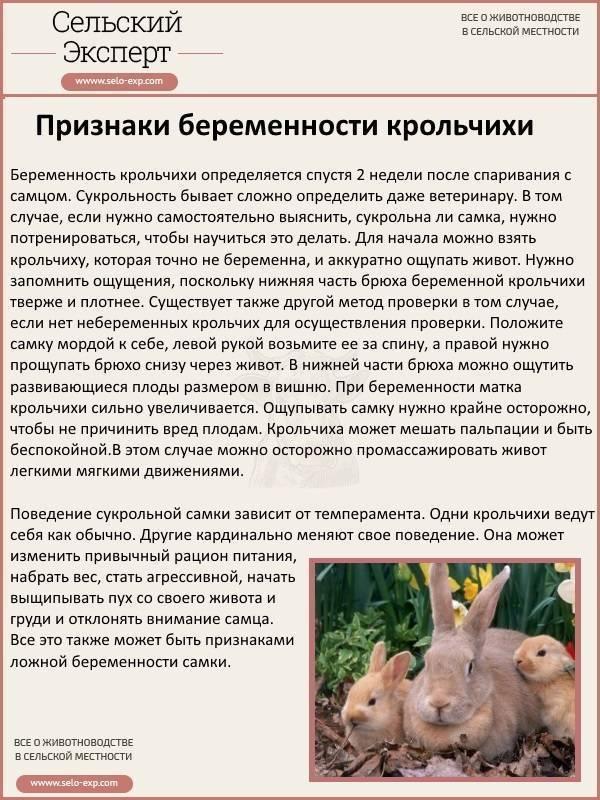Чем кормить беременную крольчиху: рекомендации, составление рациона, устранение распространенных ошибок при уходе