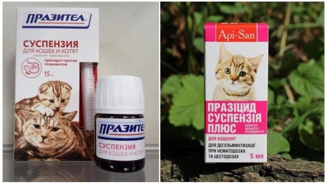 Таблетки от глистов для кошек - обзор эффективных антигельминтных препаратов широкого спектра